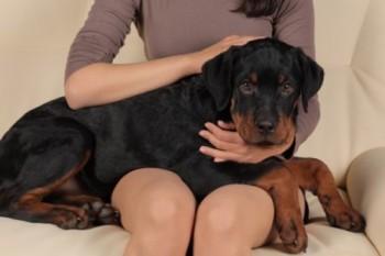 Beneficiile pe care le aduc animalele de companie