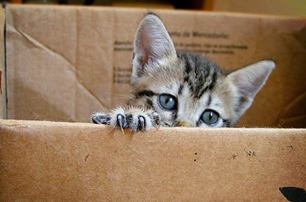 pisica acasa / cadou zodii