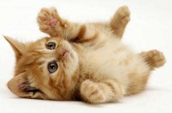 Ce trebuie sa stii inainte de a-ti lua o pisica