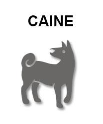 zodiac-chinezesc-caine