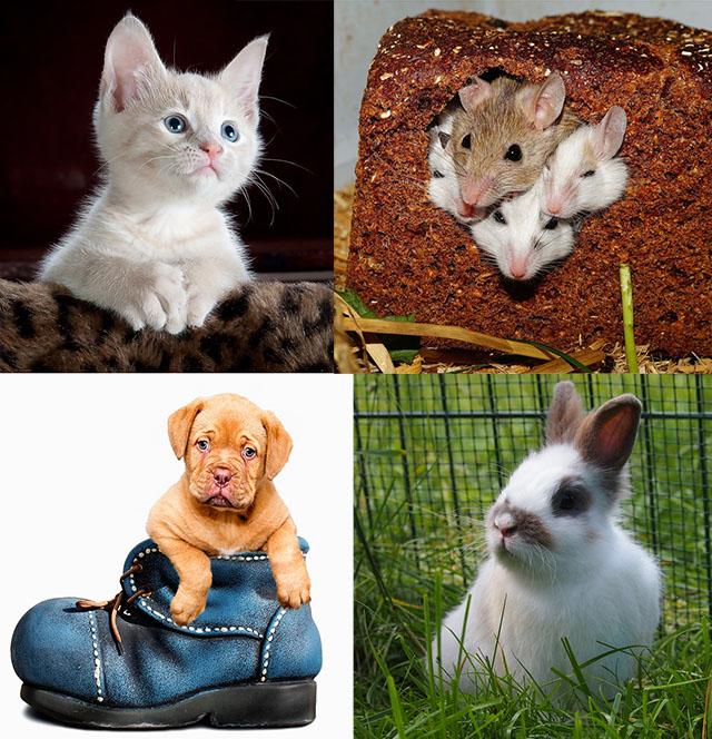 Cum iti alegi animalul de companie / pisica -hamster - caine - iepuras