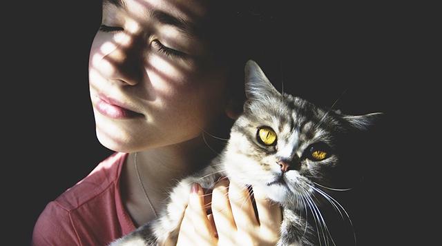 pisica-mangaiere